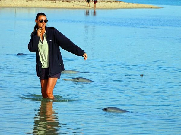Delfine beobachten in Monkey Mia