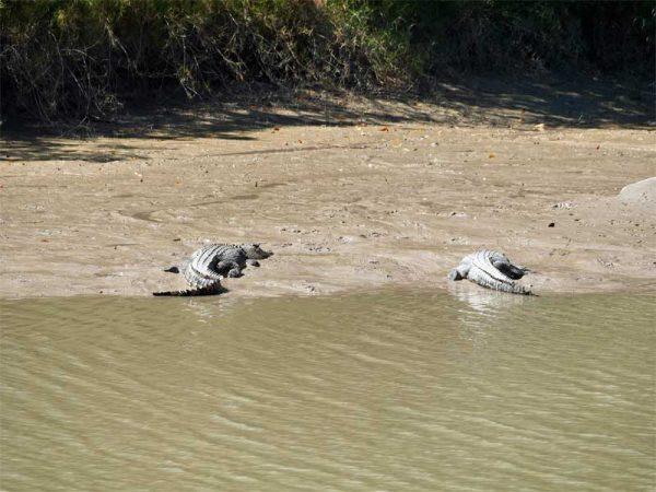 Zwei weitere Krokodile im East Alligator River, Kakadu Nationalpark