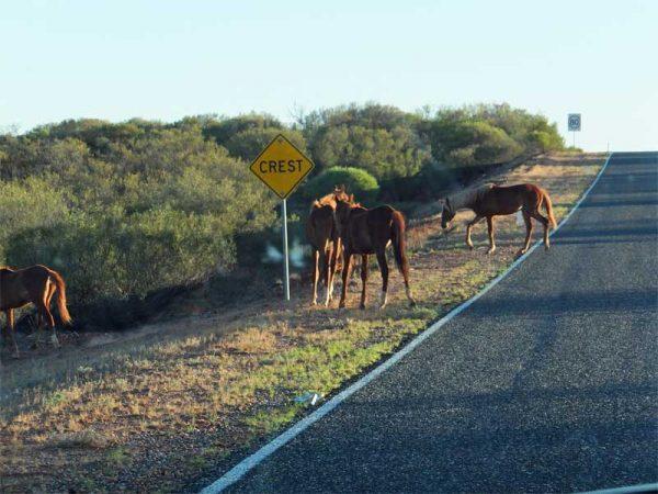 Stuart-Highway_Australien