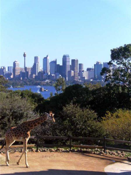 Taronga Zoo mit der Skyline von Sydney