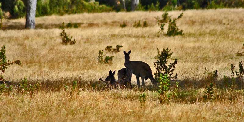 Ist Australien geeignet für eine Camperreise?