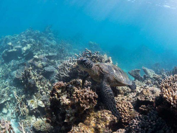Schnorcheln am Ningaloo Reef, Coral Coast, Western Australia