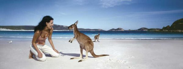 Känguru in der Lucky Bay, Western Australia
