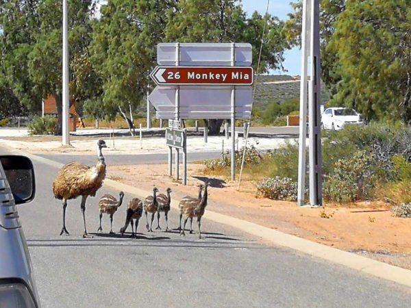 Monkey Mia, Western Australia, Australien