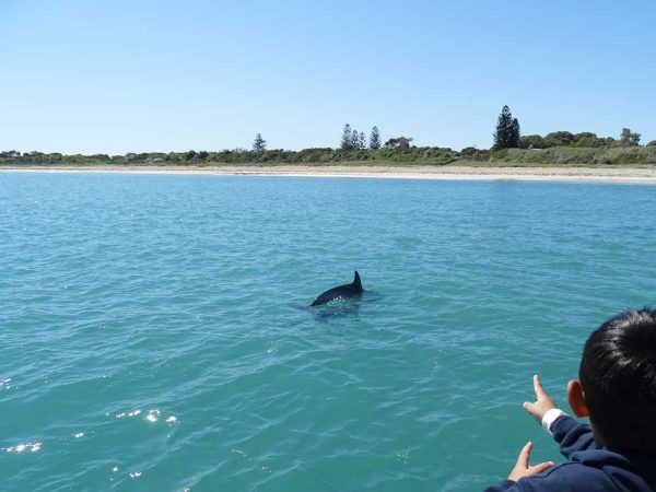 Penguin Island Tour in Westaustralien