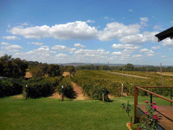 Swan Valley Wein Region