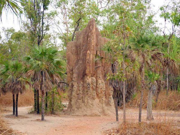 Die Termite Mounds im Litchfield Nationalpark